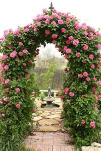 arbor climbing roses garden and fountains pinterest