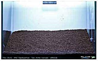 Pasir Malang Kasar Untuk Aquascape membuat sendiri akuarium aquascaping akuarium ikan hias