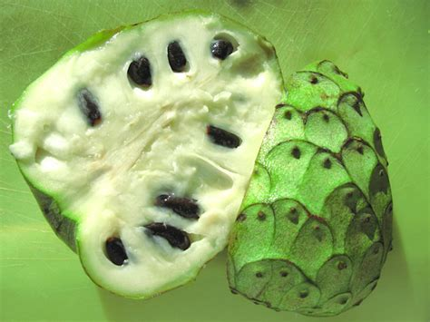 fruits with seeds cherimoya fruit tree seeds nutrition growing uses