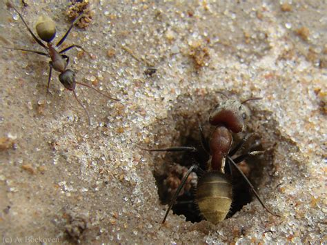 baby ants in bathroom insects 6legs2many