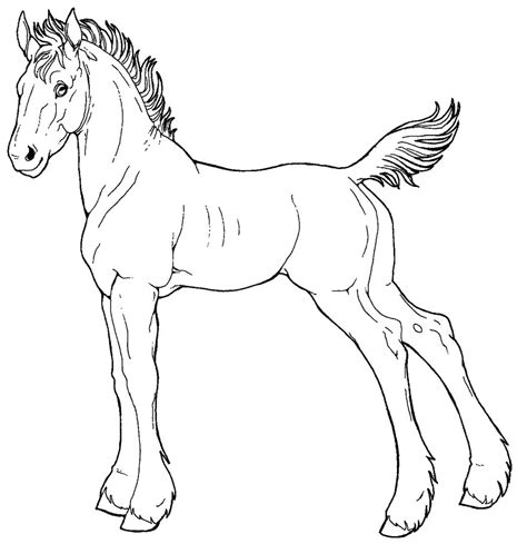 Draft Coloring Pages Free Line Art Draft Foal By Applehunter On Deviantart by Draft Coloring Pages
