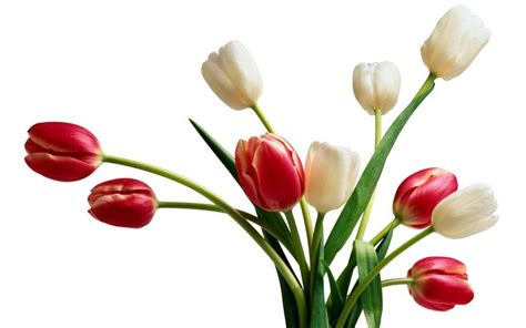 google images flowers flower images google search bouquets de fleurs pinterest