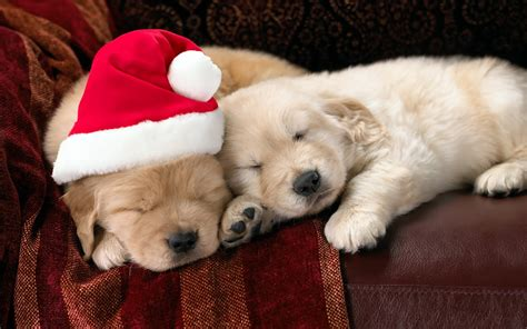 christmas wallpaper with puppies wallpaper dog new year christmas puppy christmas