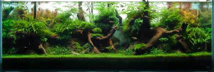 decoration aquascaping bring nature inside home ideas