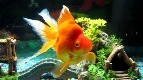 Umpan Pancing Buatan pancing ikan related keywords suggestions pancing ikan keywords