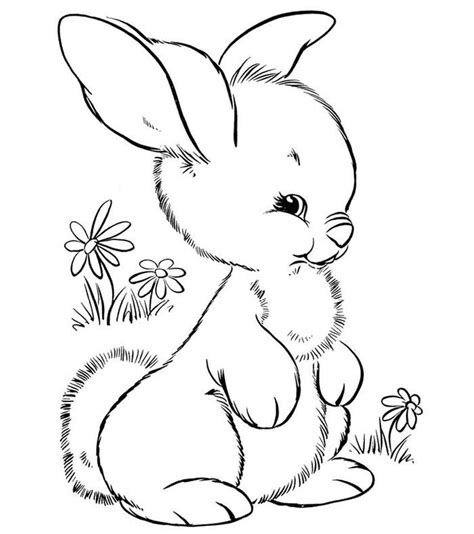 baby bunny coloring pages coloring home baby rabbits coloring pages coloring home
