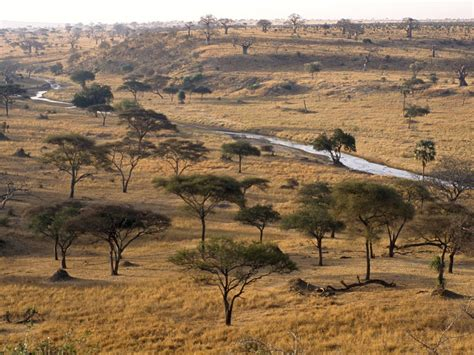 40 Meters To Feet by Habitats Savanna Grassland Pictures Wallpapers