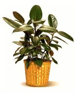 indoor plant indoor air purifying plants top 10 air purifying plants