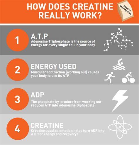 creatine benefits the benefits of creatine monohydrate