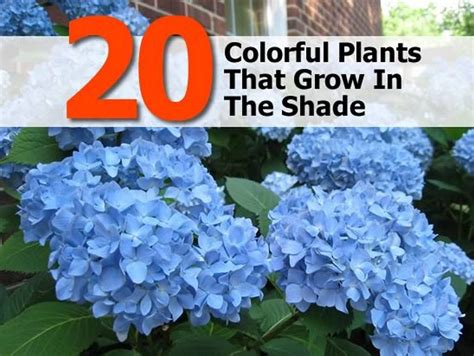 plants that don t need sunlight to grow 28 outdoor plants that don t need sunlight four great