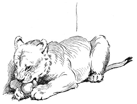 coloring page lion cub lion cub cartoon coloring pages coloring pages