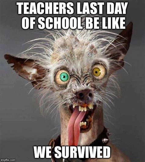 Ugly Dog Meme - last day of school meme www pixshark com images
