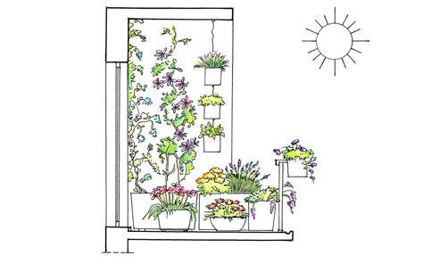 piante per terrazzo in pieno sole 22 piante per riparare un terrazzo in pieno sole casafacile