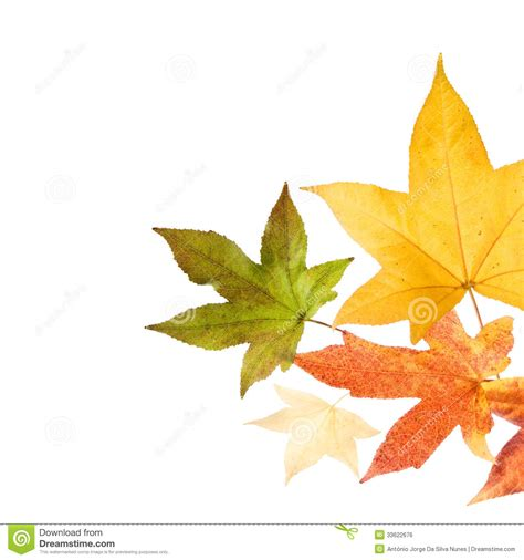 Autumn Fall Leaves Stock Photo Image Of Gold Nature 33622676 Fall Leaves On White Background