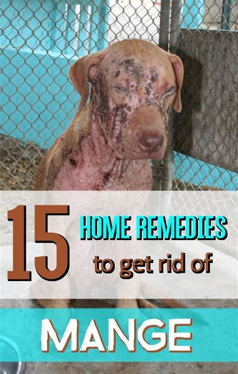 how to get rid of mange on dogs the world s catalog of ideas