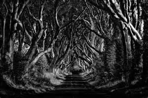 dark hedges northern ireland tim burton blurppy