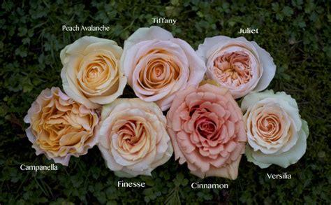 study of flower colours in the garden roses flirty fleurs the florist inspiration