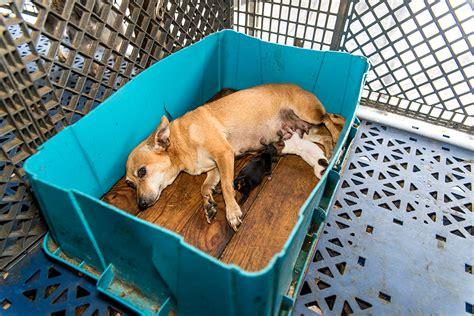 aspca puppy mills update view new footage from our fl puppy mill raid aspca