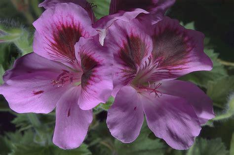 flowers photos 28 images photos of flowers photos of slideshow 772 28 pink flowers in a plant shop quot rasteniya