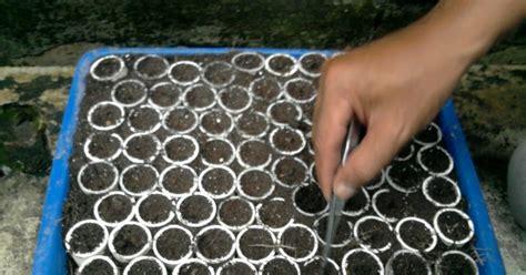 Paralon Maspion 3 Dim cara unik penyemaian bibit dengan pipa paralon petani top