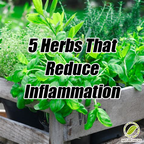 Garden Of For Your Inflammation Garden Of For Your Inflammation 28 Images The World S