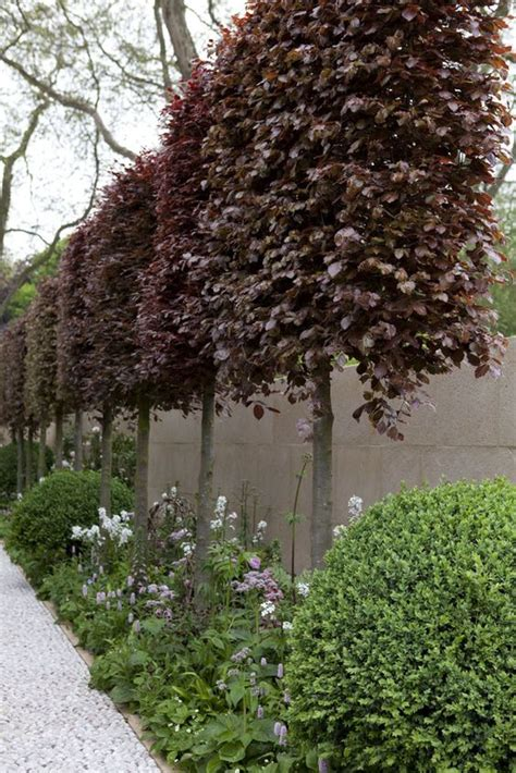 copper beech small gardens and copper on pinterest