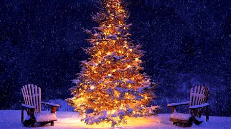 picture of tree with lights snowing tree and