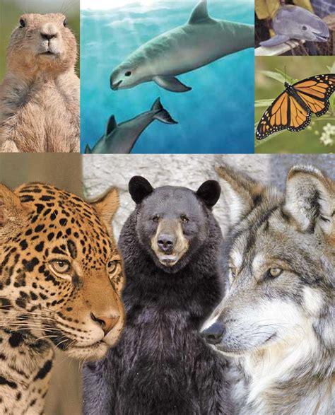 imagenes de animales en peligro de extincin 07 view image animales en peligro de extinci 243 n mi ambientemi ambiente