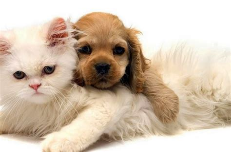 kittens and puppies for sale tag for pictures of puppies and kittens for sale kittens for sale wallpaper cats and