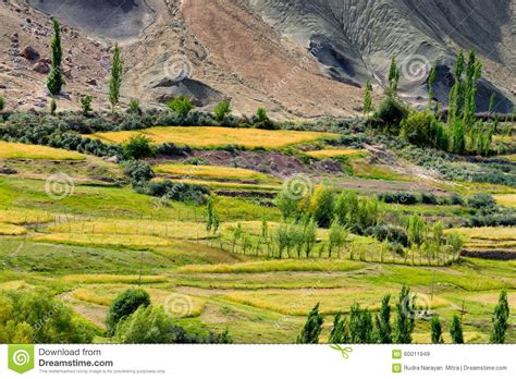 valley view landscaping ladakh landscape green valley field agriculture basgo leh ladakh india stock photo