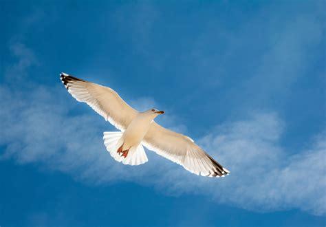 il volo gabbiano richard bach continua a volare sulle ali gabbiano