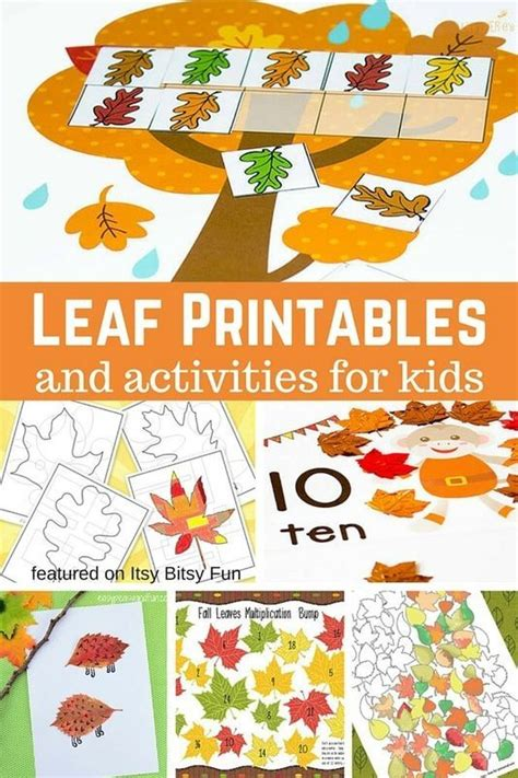 printable preschool leaf activities 114 best fall ideas for classroom images on pinterest