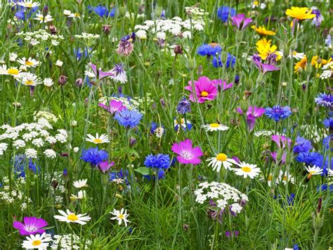 Best Plants For Bedrooms by Sow A Flower Meadow Hgtv