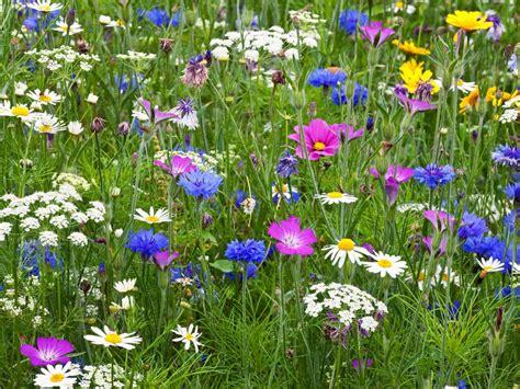 Hgtv Bathroom Design sow a flower meadow hgtv