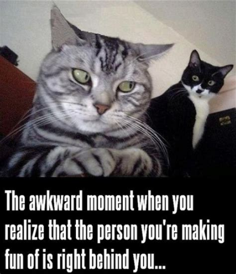 Cat Sitting Meme - cat saturday 31 photos thechive