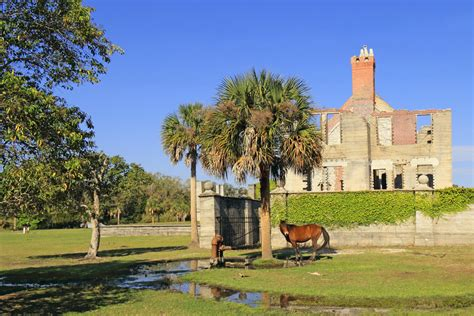 cumberland island reservations five things to do with on amelia island orbitz
