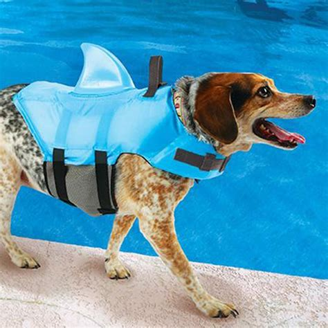 Puppy Giveaway Near Me - shark dog lifejacket