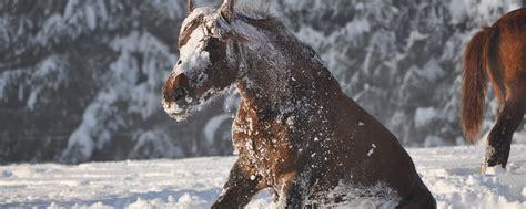 pferd eindecken ab wann eindecken oder ausdecken wann friert mein pferd und wann