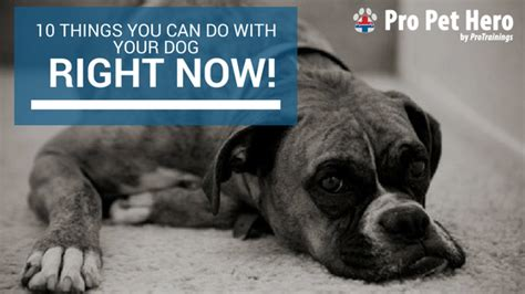 do dogs when your 10 things to do with your right now pro pet