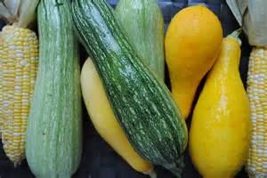 Root Vegetables - summer harvest gourmet