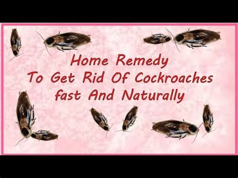 the best way to get rid of roaches permanently