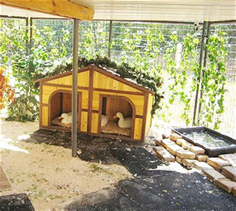 Pool Shed Plans How To Care For Pet Ducks