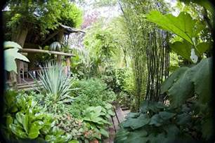 hardy exotic plants to grow in the uk nick wilson s garden