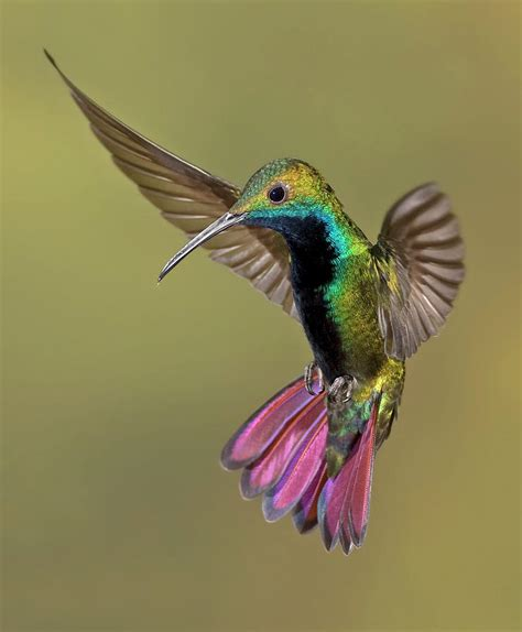 colorful humming bird by image by david g hemmings