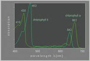 430and lambda 662 nm that of chlorophyll b are at 453 and642 nm