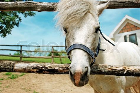 cute hairstyles for horses portrait of white cute horse long hair outdoor stock