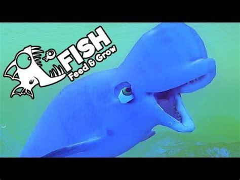 feed and grow fish gameplay german gigantischer beluga