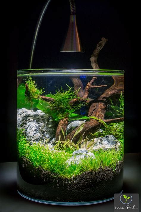 Aquascaping Materials by Best 25 Nano Aquarium Ideas On Freshwater