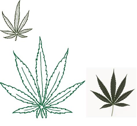 weed leaf tattoos i ll never stop wanting a pot leaf tattoos