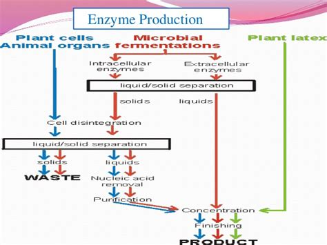 Microbes in biological control,Fermentation and enzyme technology
